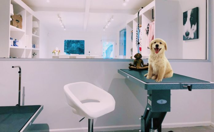 This Secret West Hollywood Luxury Dog Store Is Swarmed By